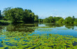 Quadro lake with water lilies