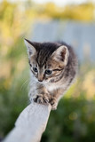 little Tabby cat in the green summer grass