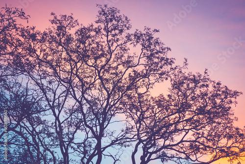 Aluminium Candy roze Tree silhouette