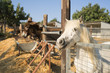Donkey and pony on a farm on Cyprus
