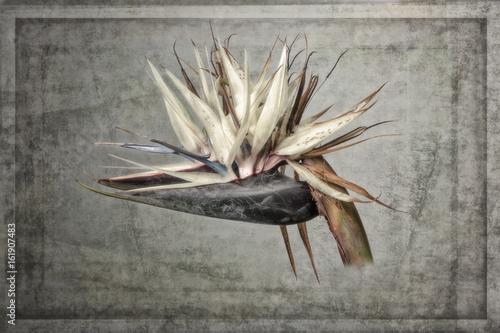 Obraz na Szkle Travelers Palm