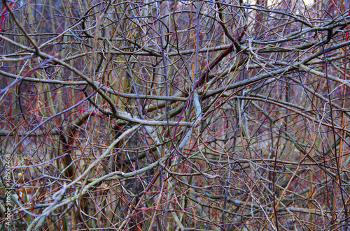 Woven branches bush, expressionism, Jackson Pollock Poster