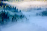 Foggy Landscape in Mountains. Beautiful morning landscape with trees in the fog. - 161962201