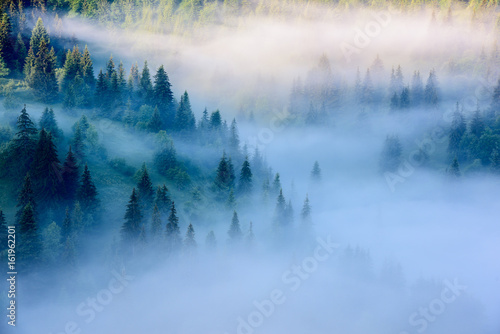Fototapeta Foggy Landscape in Mountains. Beautiful morning landscape with trees in the fog.