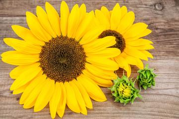 two yellow sunflowers