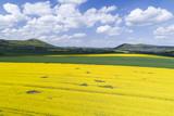 Landschaft mit Rapsfeldern in Blüte