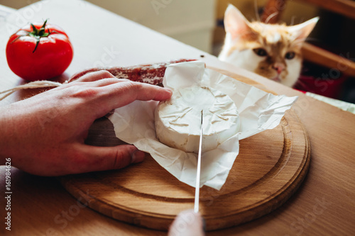 The cat helps to cook a delicious dinner with cheese, salami and tomatoes - 161984626