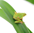 frog sitting on a leaf