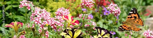 Fotobehang Purper Schmetterling 368