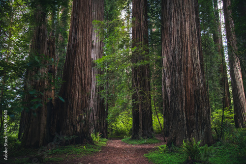 Lush forest hiking path.
