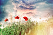 Red poppy flowers in meadow and beautiful sky, selective focus on poppy flowers