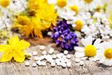 Homöopathie, Heilpflanzen mit Globuli, Textraum, copy space