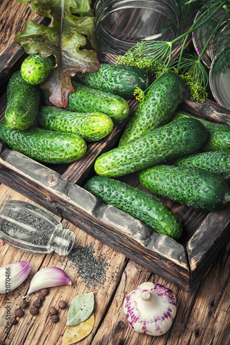 Fresh cucumbers for pickling
