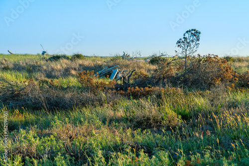Ocean grasslands before sunset