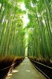 竹林/朝の竹林の木洩れ日を清々しく表現しました.
