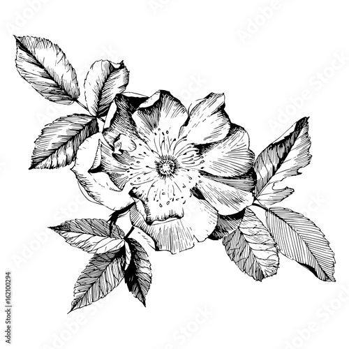 Hand Drawn Botanical Art Isolated On White Background Floral