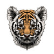 tiger cub head sketch vector graphics color picture