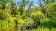 летний пейзаж с ручьем и зеленой растительностью на берегу, Россия, Урал