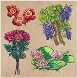 Flowers - An hand drawn colored vector pack. Line art. - 162167854