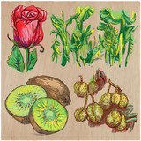 Flowers - An hand drawn colored vector pack. Line art. - 162167893