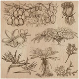 Flowers - An hand drawn vector pack. Line art. - 162168011