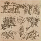 Flowers - An hand drawn vector pack. Line art. - 162168061