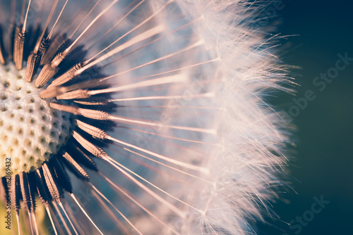 close up of Dandelion, spring abstract color background - 162169432