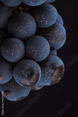 Closeup , dark bunch of grape in low light on black isolated background , macro shot , water drops , berry stone  - 162172668