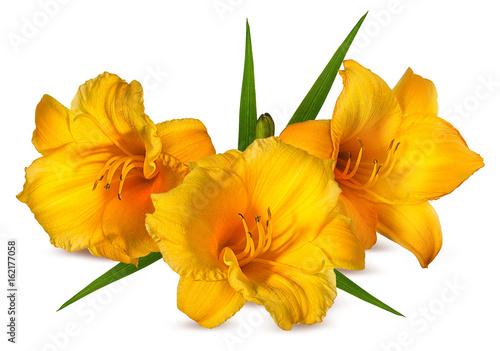 orange Lilly flower on white Poster
