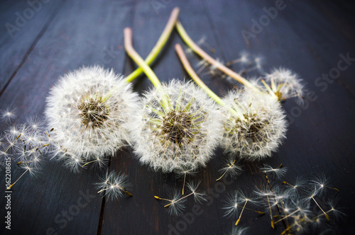 Three dried dandelions on the wooden table