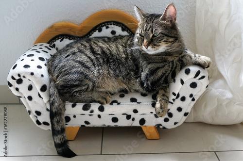 tiger katze auf einem sofe