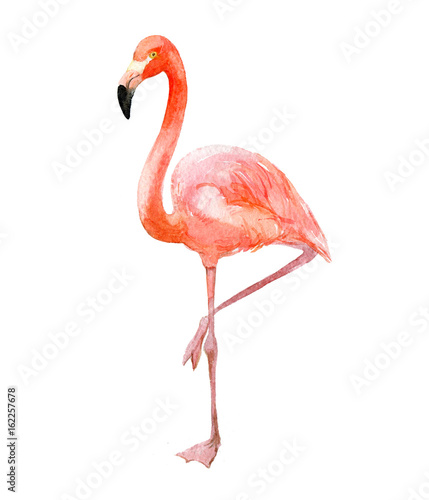 Pink flamingo, isolated on white background, watercolor illustration