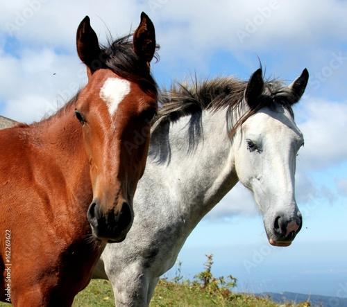 Two lovely horses on green field against blue sky