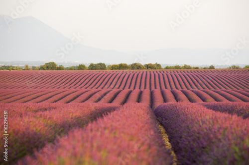 Spoed canvasdoek 2cm dik Lavendel lavandes en Provence