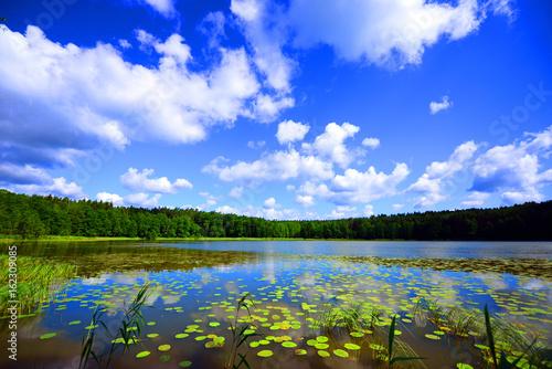 view of the lake's shore in Masuria District, Poland