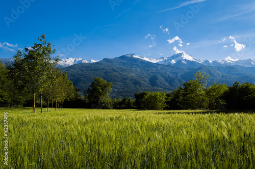 4031cc3bd9ed8 Spring colours. Mountains scenery and green meadow at sunset | Buy ...