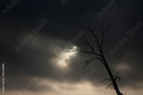 Backlit naked tree against dramatic sky