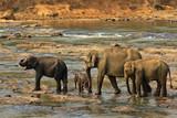 Family of Indian elephants - 162376813
