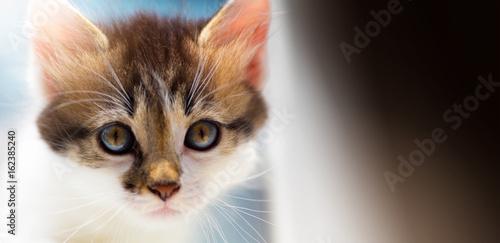 Lost Lone cute kitten szuka gospodarza