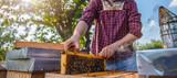 Beekeeper checking beehives - 162392889