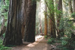 Northern California - Redwoods
