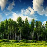Beautiful landscape with birch tree forest, blue cloudy sky above it. Summer sunny landscape.