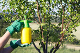 Woman with gloves spraying a leaves of fruit tree against plant diseases and pests. Use hand sprayer with pesticides in the garden. - 162436049