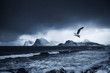 sea gull`s landing