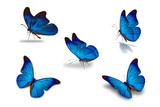 fifth blue butterfly - 162461412