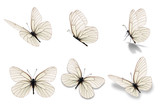 six white butterfly - 162461444