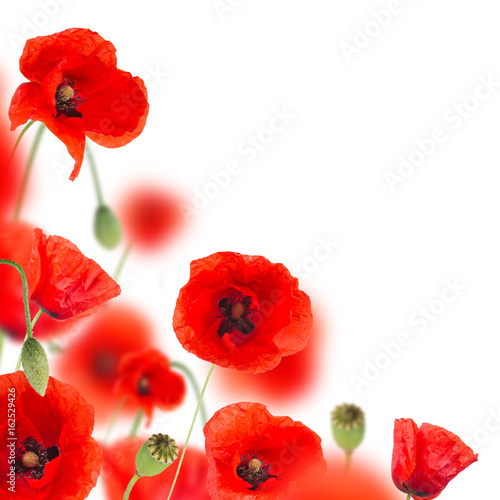 Foto op Canvas Rood Beautiful poppy background, close-up.
