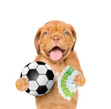 Funny dog holding money and ball in his paws. isolated on white background