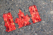 Canadian flag made with real autumn maple lleaves.