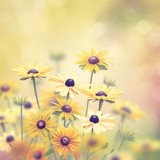 Yellow Flowers background - 162580047